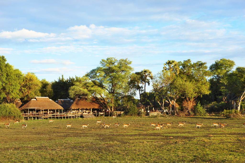 Mombo Camp landscape- photo credit Mickey Hoyle